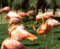 flamingo2 edited